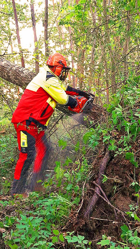 Gefahr durch umgestürzten Baum am Posthof beseitigt